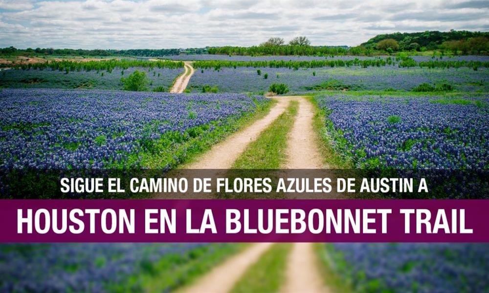 Bluebonnet trail: el camino de flores azules en Texas