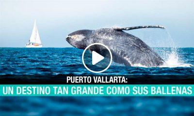 Puerto Vallarta: en destino tan grande como sus ballenas