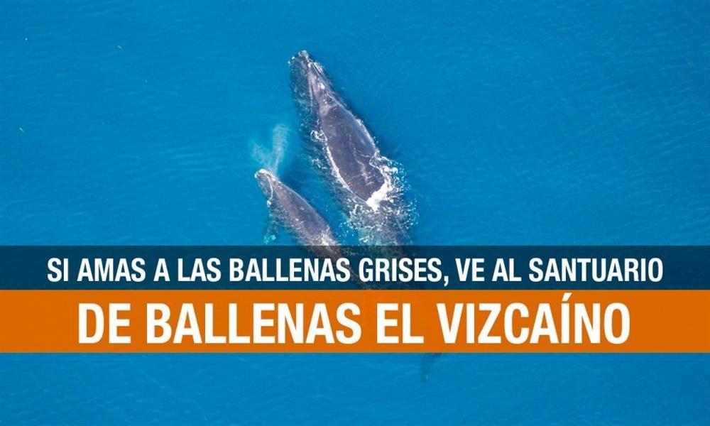 Reserva de la Biosfera El Vizcaíno: Santuario de ballenas