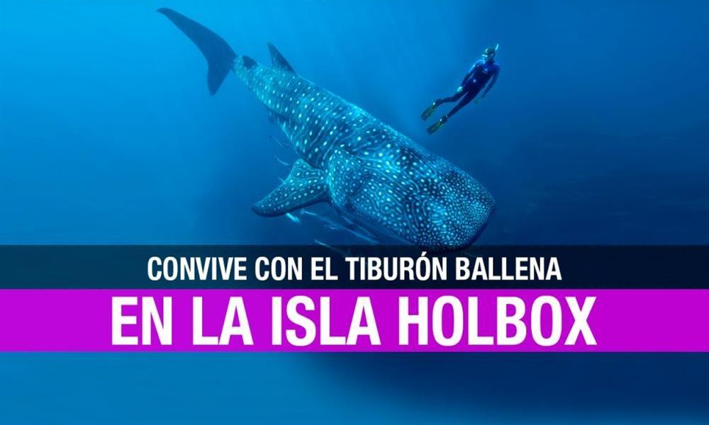 Holbox: un paraíso para nadar con el tiburón ballena