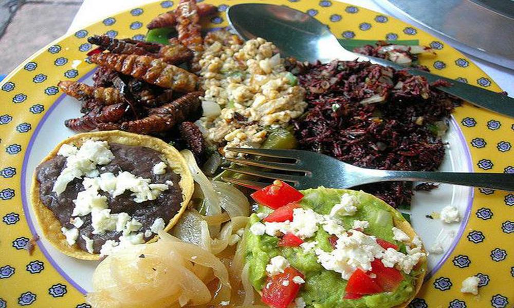Comida exótica en México: Insectos