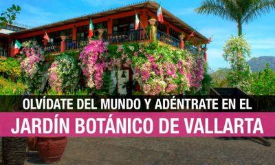 Jardín Botánico de Vallarta: un mundo de orquídeas