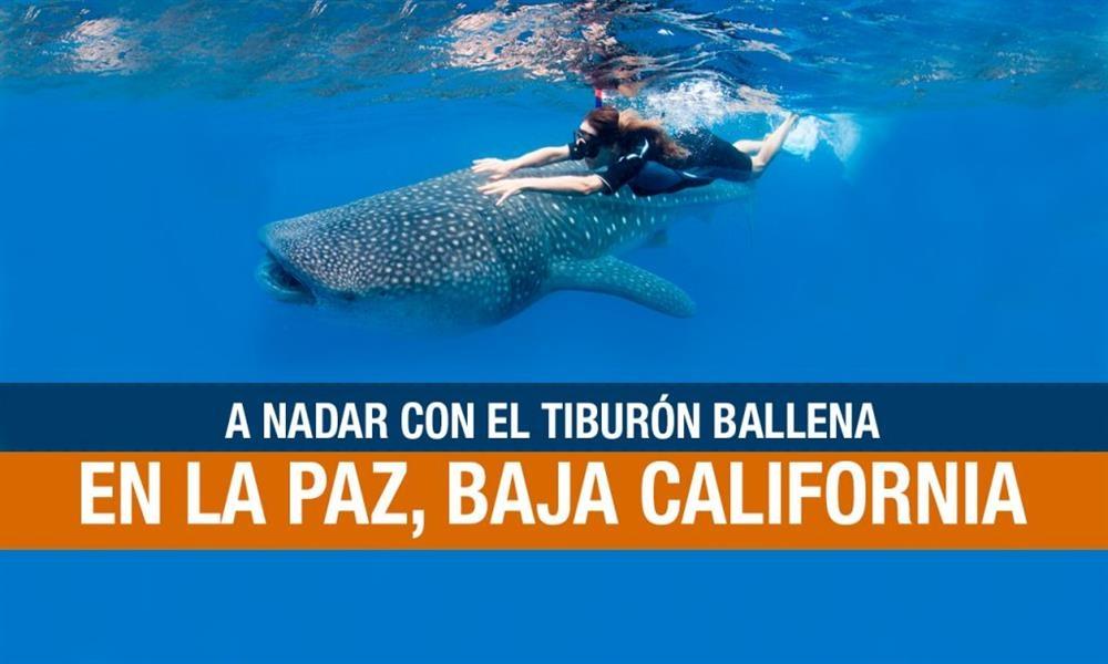 La Paz, Baja california – Ven a nadar con ballenas