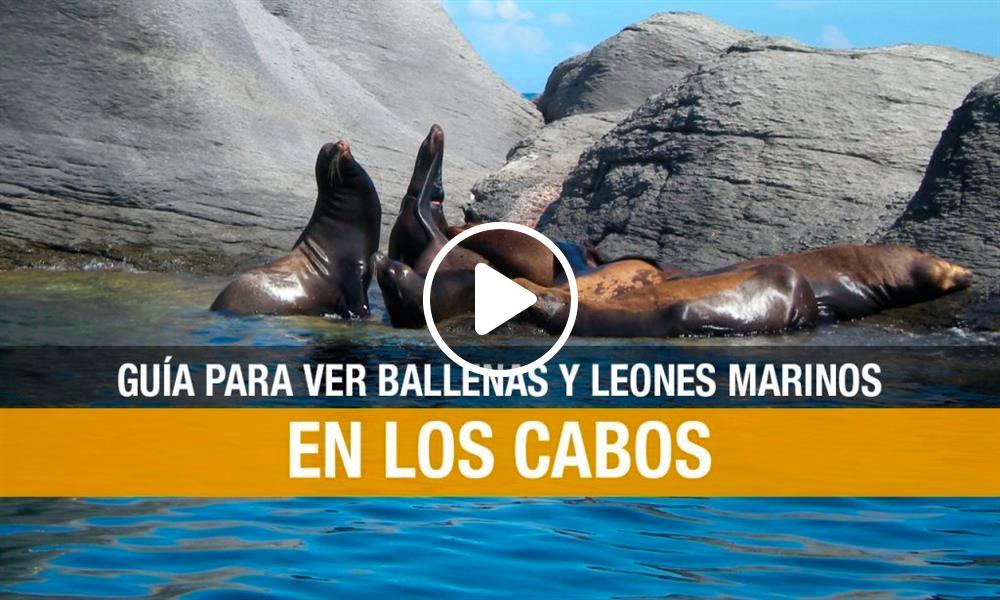 Los Cabos: guía de aventuras y atractivos