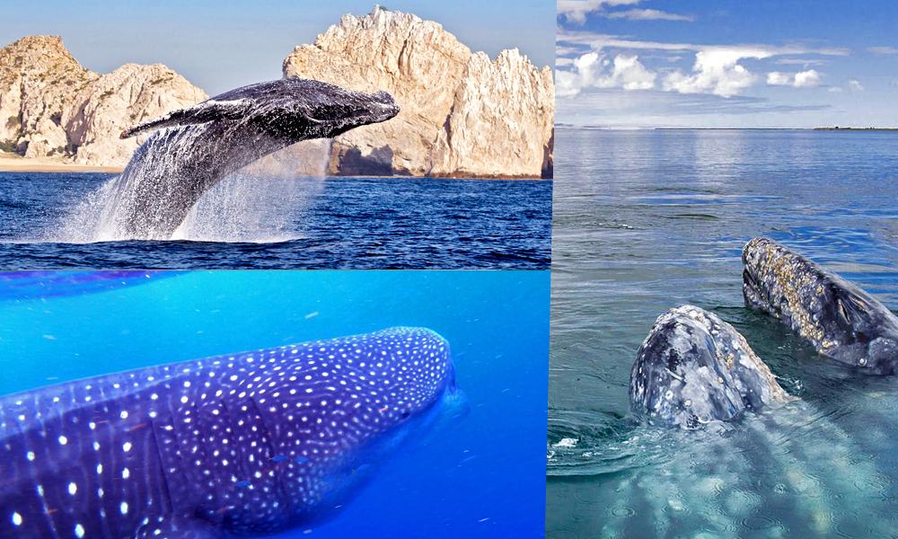 10 mágicos destinos para ver ballenas en México