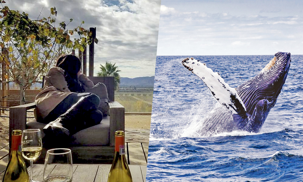 Ensenada, un destino de viñedos y ballenas en Baja California