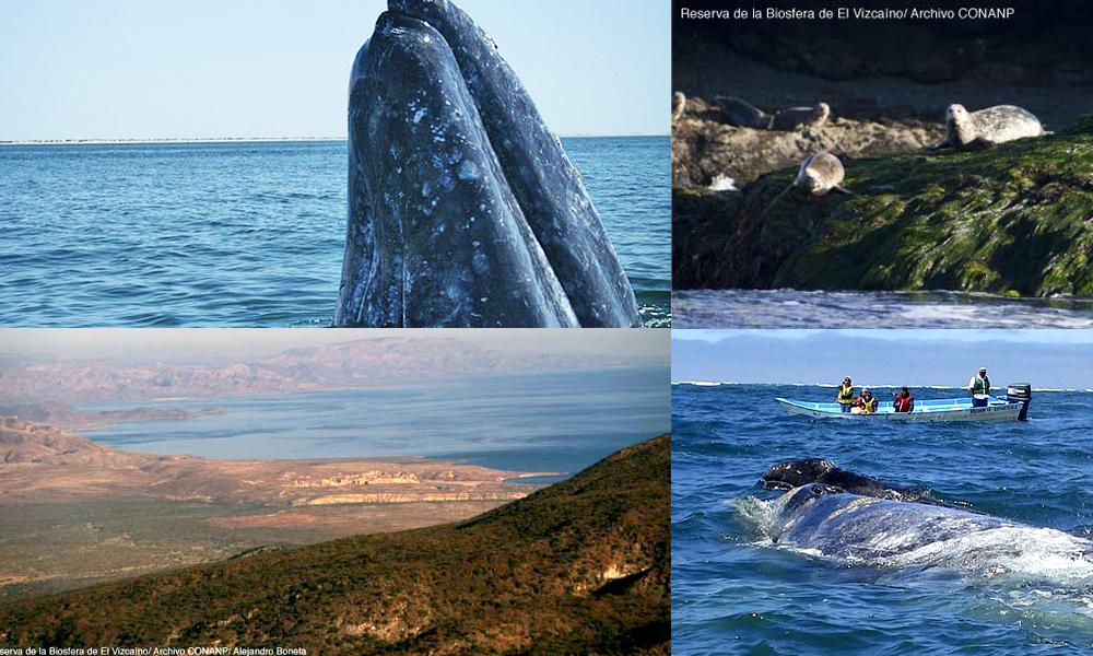 Santuario de ballenas El Vizcaíno: una aventura inolvidable