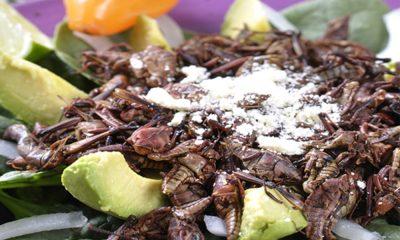 Chapulines, un manjar exótico de la comida mexicana