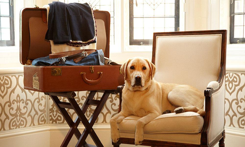 Conoce estos 5 destinos en México para viajar con tu perro