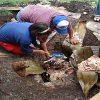 Cómo preparar la barbacoa de hoyo estilo Tlaxcala