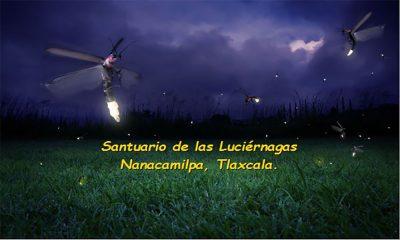 Disfruta del Santuario de las Luciernagas en Tlaxacala