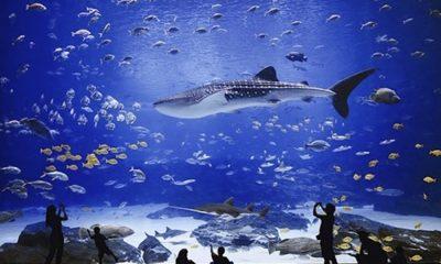 Maravíllate con los mejores acuarios del mundo