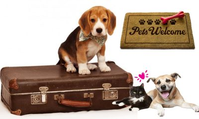 Turismo Pet Friendly en Querétaro, para llevar a tu mascota