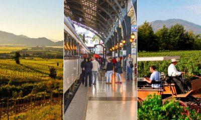 Descubriendo el mundo del vino chileno ¡Salud!