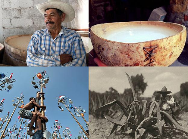 La cultura ancestral del pulque y el maguey