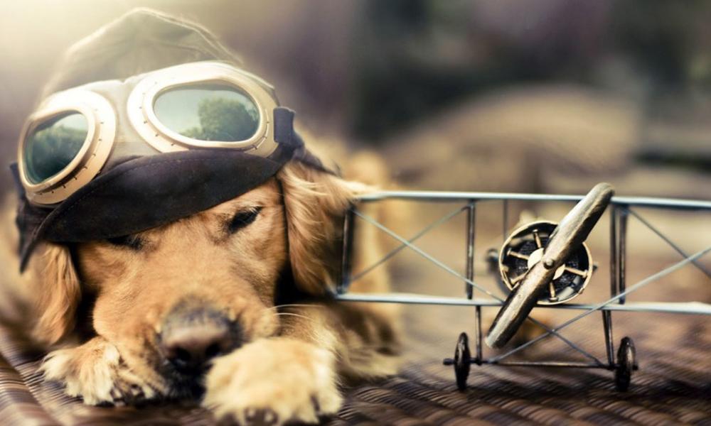 Viaja con tu perro: conoce estos consejos para disfrutar del viaje