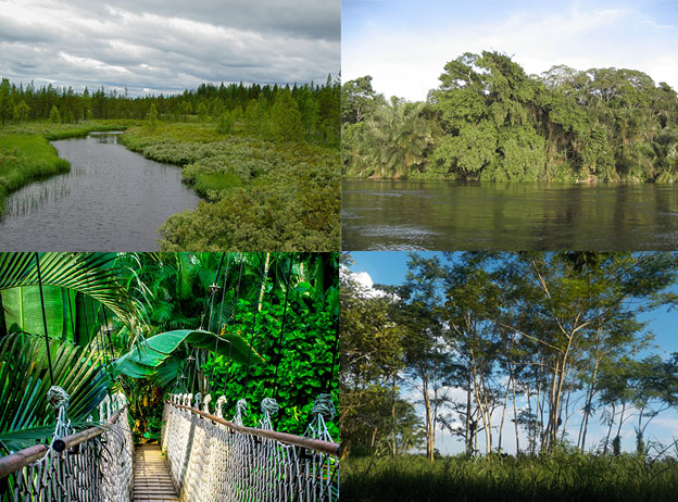 Bosques más grandes del mundo que debes conocer