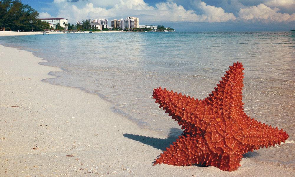 Nassau, Bahamas, aquí te decimos qué comer en este destino