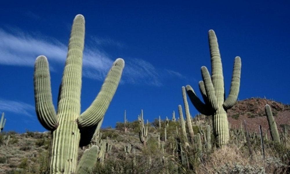 El Rosario, un santuario en Baja California Sur para descubrir