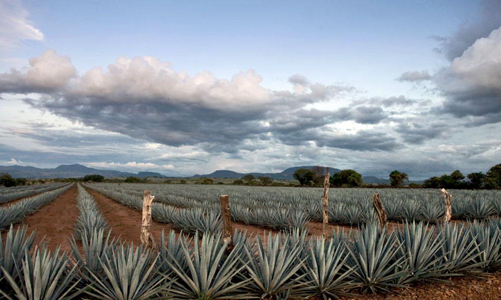 Datos curiosos del Pueblo Mágico de Tequila, Jalisco