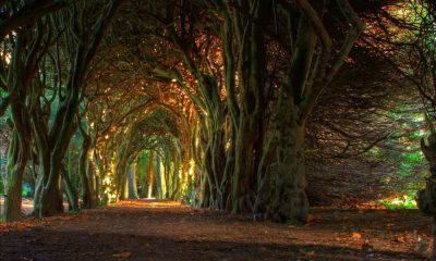 Irlanda: conoce cuáles son sus mejores lugares para visitar