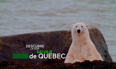 Vida Salvaje Quebec Original ANimales