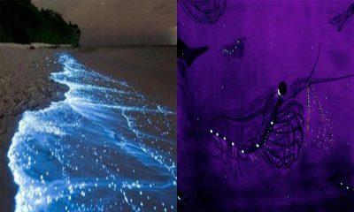 Las mejores playas bioluminscentes de México: checa cuáles son