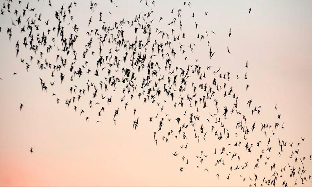 Puente de los murciélagos en Austin, Texas: conoce los mejores