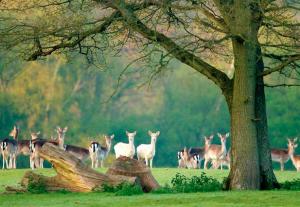 New Forest Inglaterra