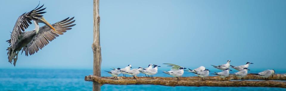 La fauna de la isla