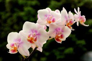 Feria de la orquidea en Coatepec