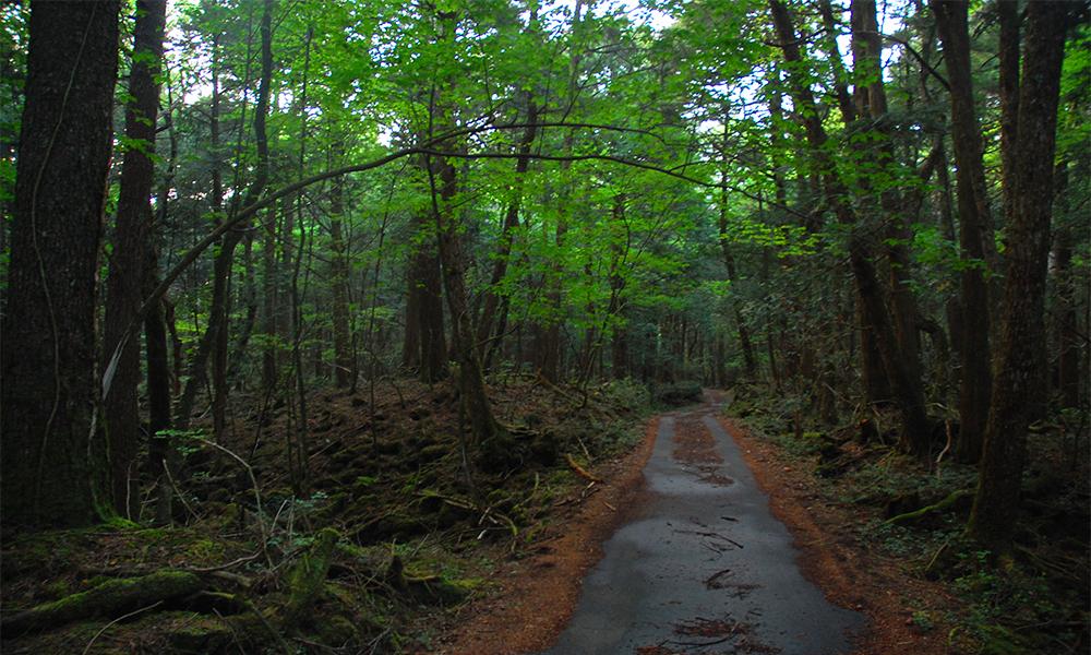Bosque de los suicidios en Japón Aokighara