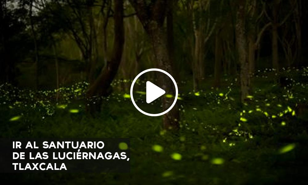 Sal de la rutina y practica ecoturismo en la malinche Espectaculo de luciernagas en tlaxcala