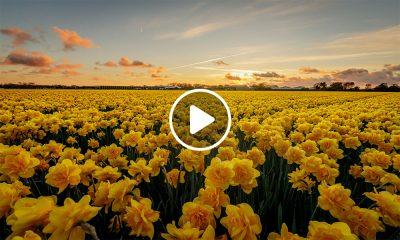 Hospedaje en campo de tulipanes en Keukenhof, Países Bajos