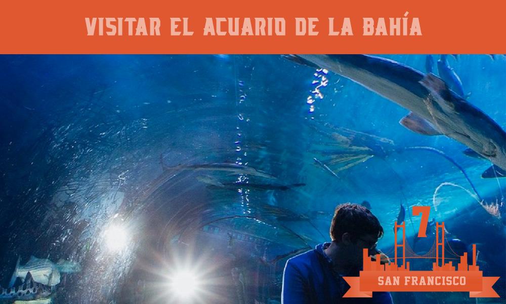 Qué hacer en San Francisco - Visitar el Acuario de la Bahía