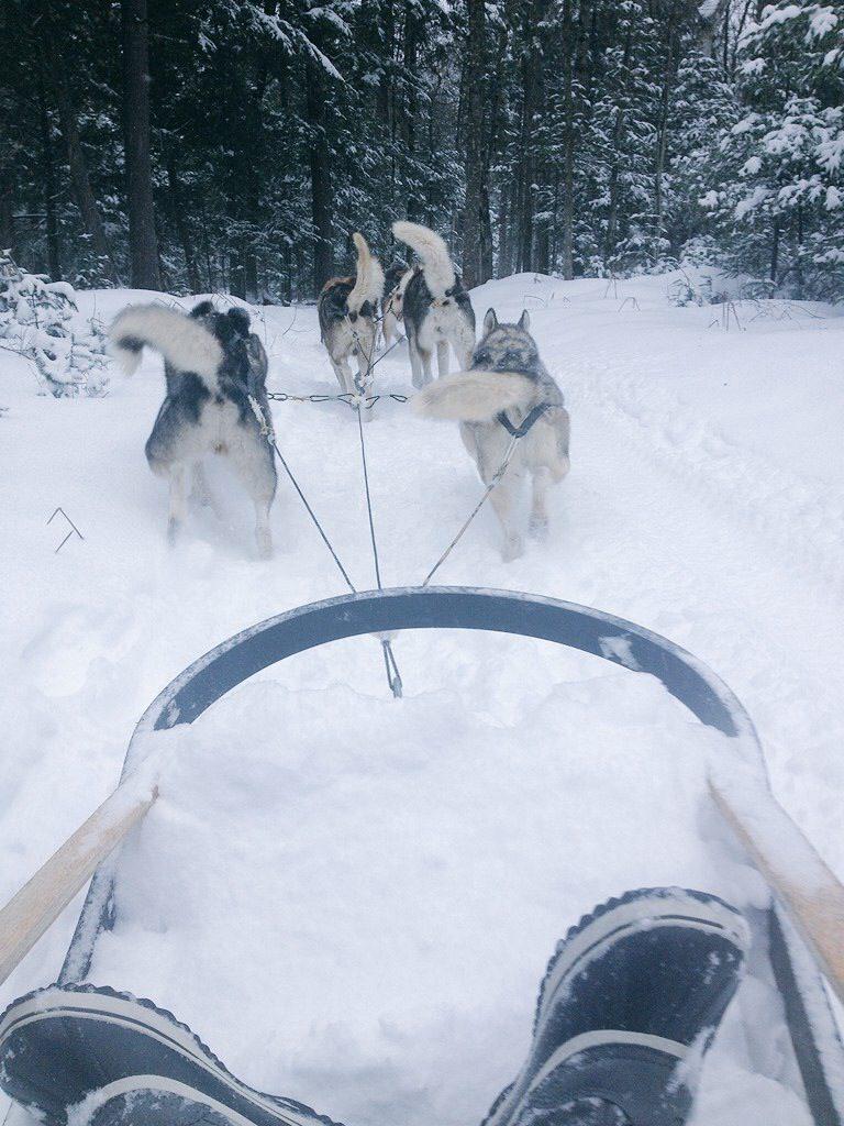 Trineo de perros en Quebec City.