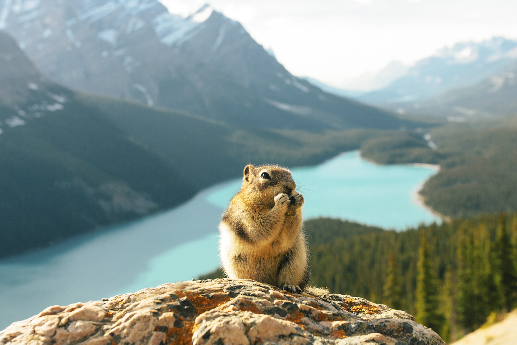Peyto-lake-icefields-parkway-alberta-canada-que-hacer-5