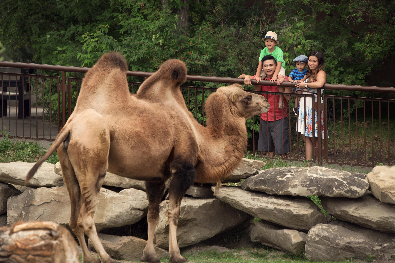 calgary-zoo-que-hacer-alberta-canada