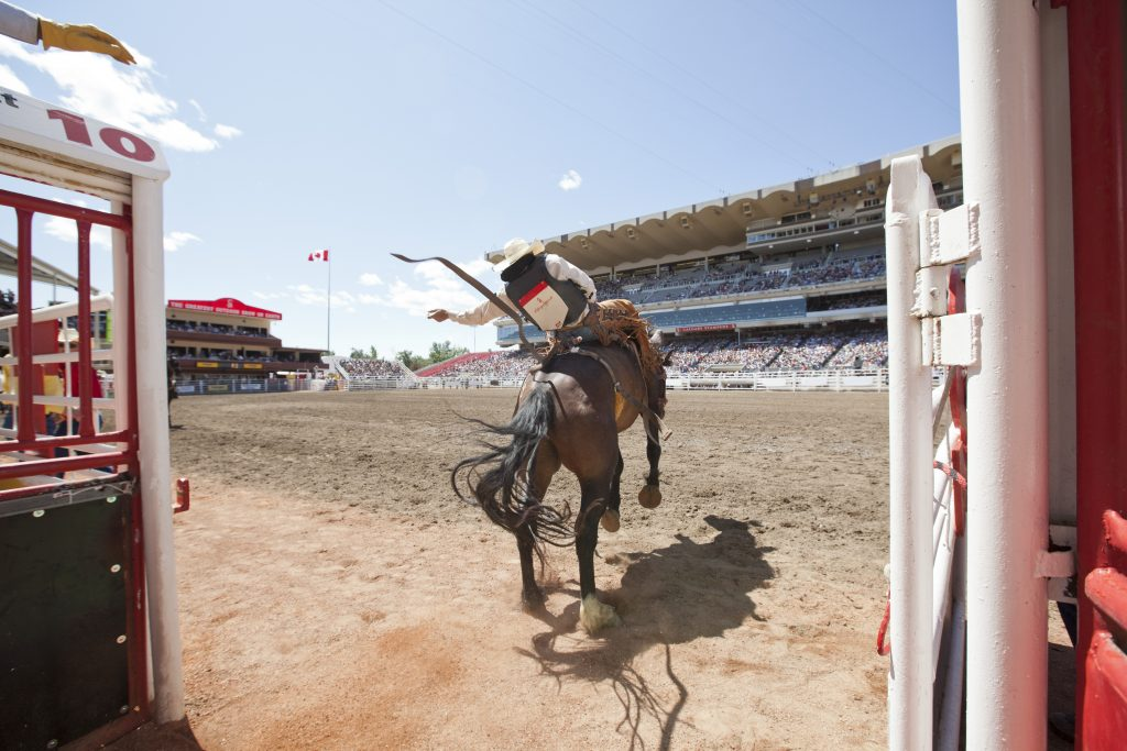 Que hacer en calgary alberta canada stampede rodeo vaquero
