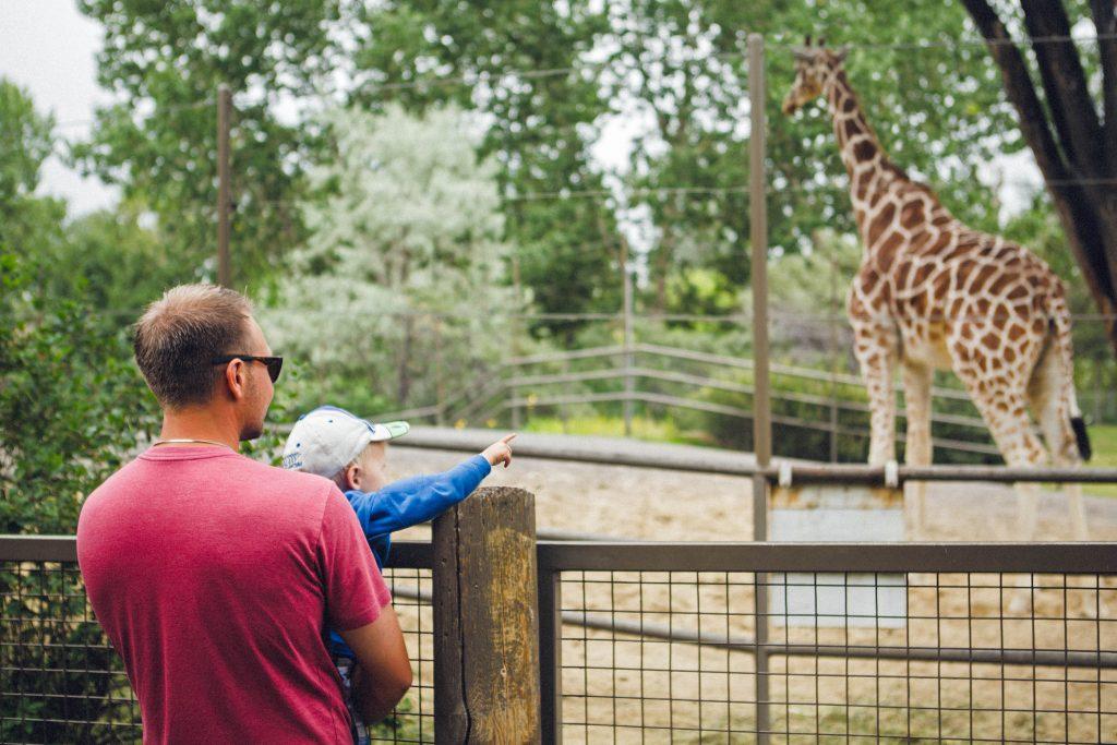 zoo zoologico que hacer calgary alberta canada