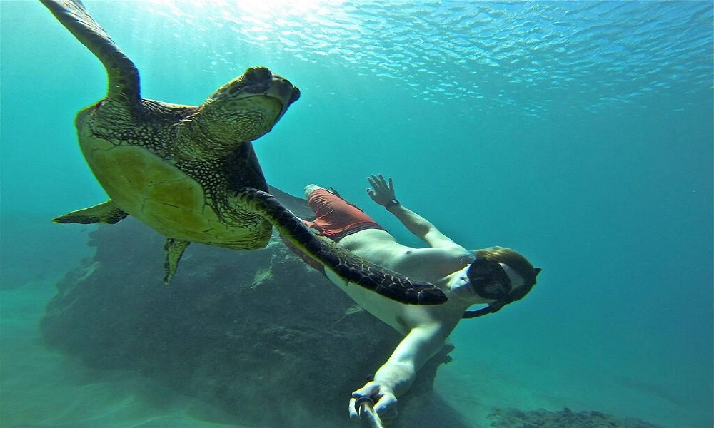 Captura las mejores fotos submarinas GOPRO