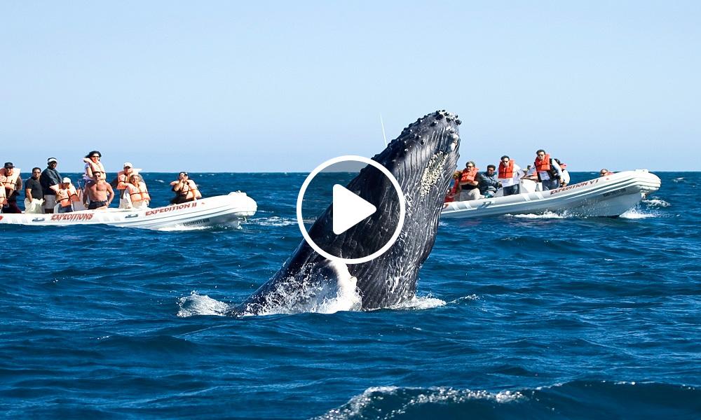 Cuánto Cuesta-Ver Ballenas en Los Cabos 1