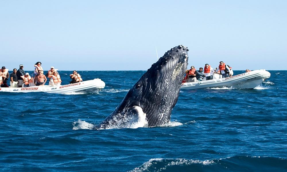 Cuánto Cuesta Ver Ballenas en Los Cabos