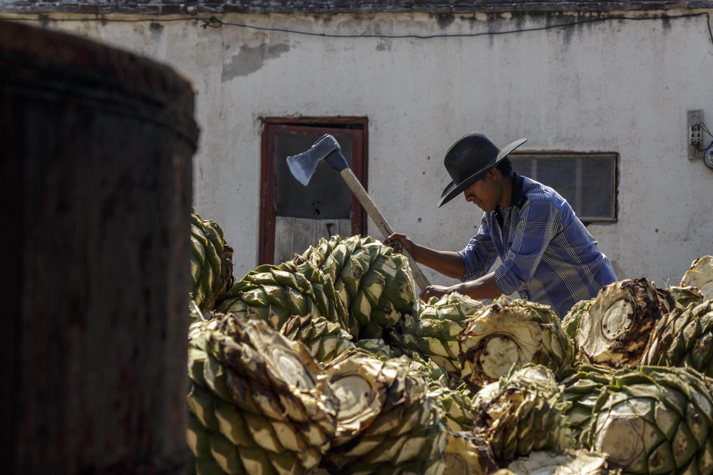 Rutas gastronómicas de México, mezcal