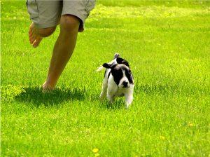 Tips: de vacaciones hasta con el perro