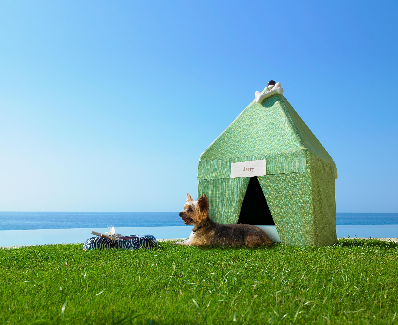Tips de vacaciones hasta con el perro6