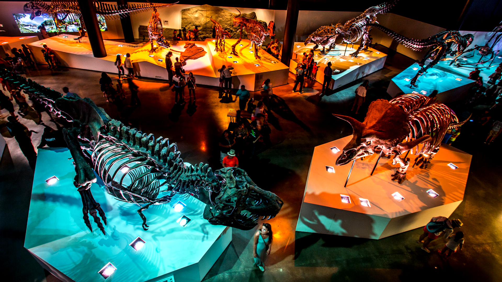 atracciones para tu primera vez en Houston Museum of Natural Science Paleo