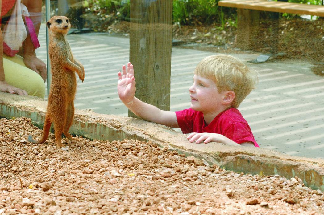 5 atracciones para tu primera vez en Houston zoo
