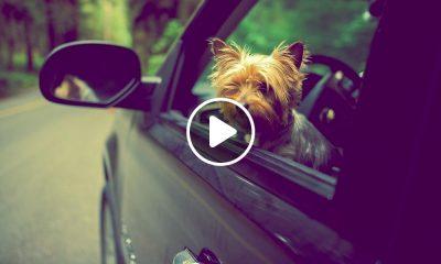Consejos para viajar con mascota en coche