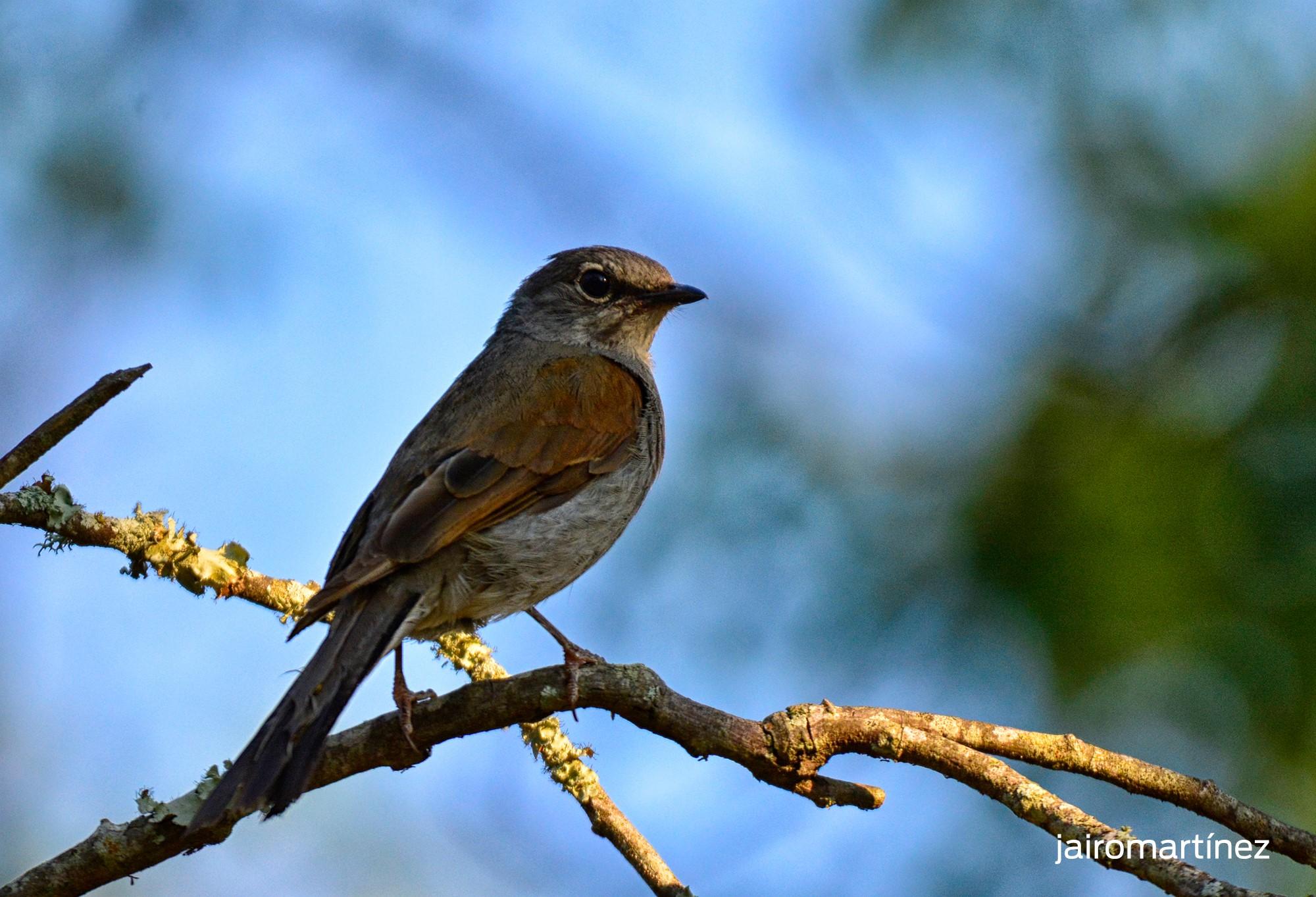 Cuánto cuesta admirar aves y volcanes en Colima aves